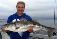 Beautiful Striper caught with sand eel plastic bait