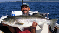 36lb Striper caught on Rhode Island Fishing Charters